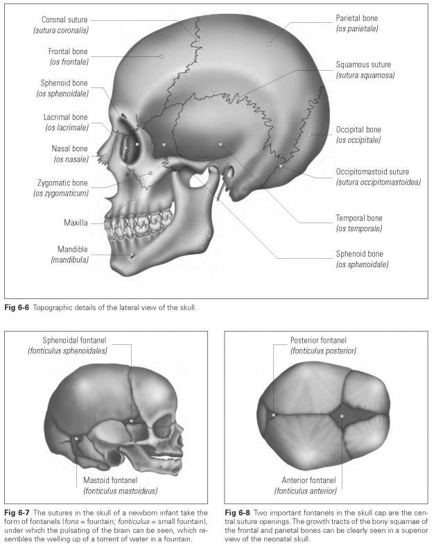 Base Of The Skull Dental Technology How To Tips
