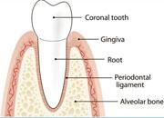 Oral cavity diseases