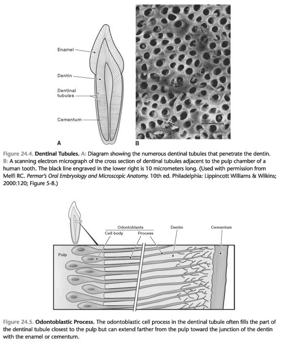 Dentinal hypersensitivity ppt download
