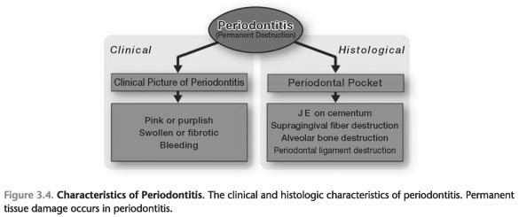 THREE BASIC STATES OF THE PERIODONTIUM
