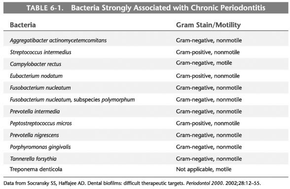 Bacteria associated with necrotizing ulcerative gingivitis