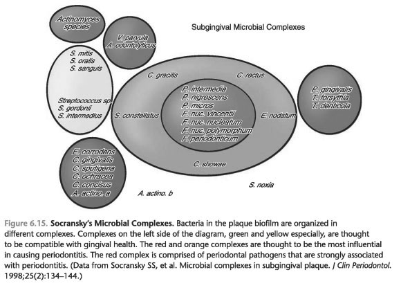 MICROBIAL COMPLEXES AND ATTACHMENT ZONES