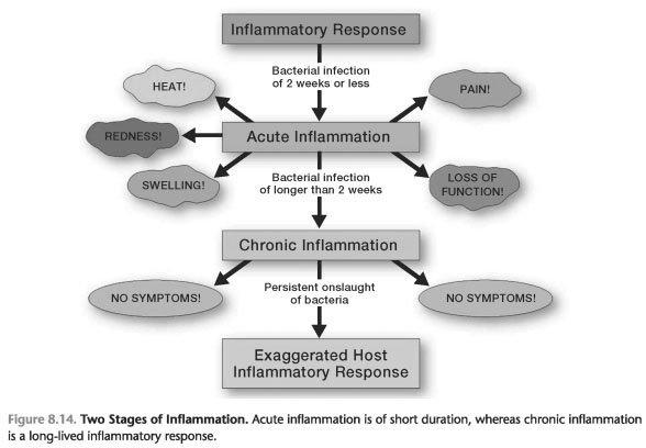 8-14) the acute inflammatory process