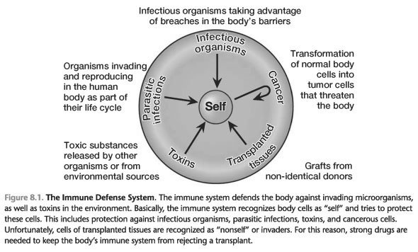 Introduction to the immune system powerpoint